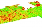 modele-struktury-pionowej-drzewostanu-podszyt