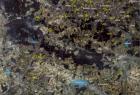 619_2-mapa-satelitarna-w-kompozycji-rgb-landsat-5-tm