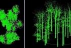 Inwentaryzacja lasu