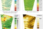 Przykładowe analizy dotyczące rolnictwa (źródło - RapidEye)