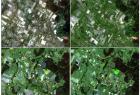 Obszary rolne w gminie Mirsk (woj. dolnośląskie) na przestrzeni roku 2012 (kompozycja RGB 321)