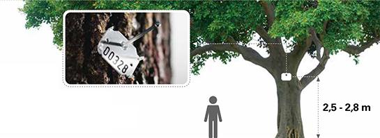 ARBO TAG - system identyfikacji drzew
